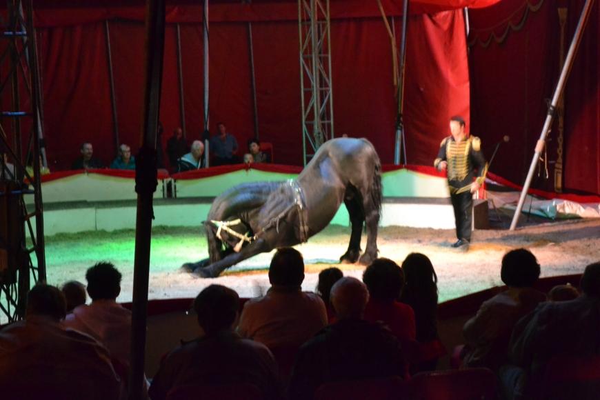 downwardfacing horse #circusyoga